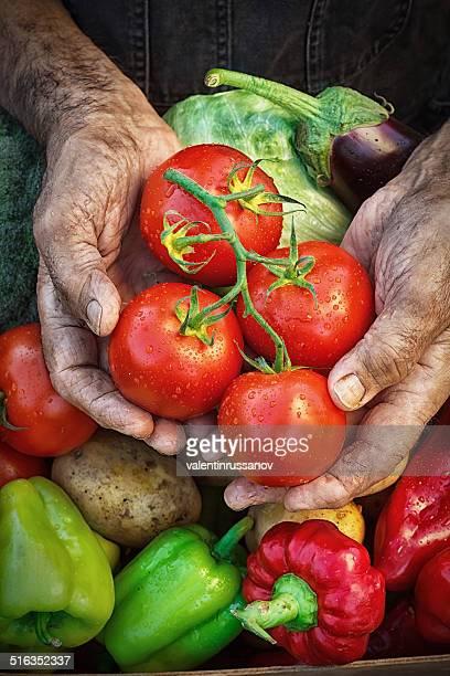 Harvest les mains