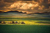 Harvest in siberia