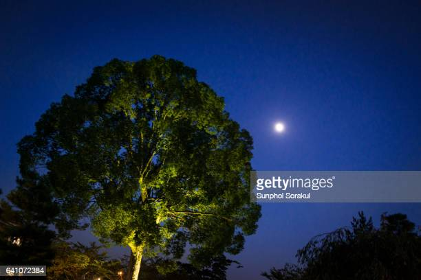 Harvest moon during moon viewing festival at Daikakuji temple in Kyoto