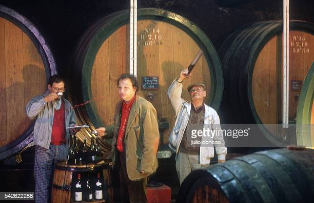 Harvest of grapes and wine making for Beaujolais Nouveau at Pierre Ferraud and Sons domain