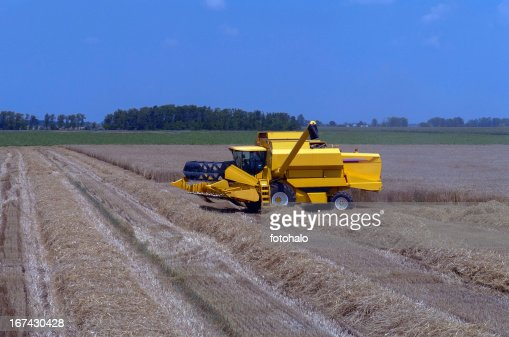 harvest : Stock Photo