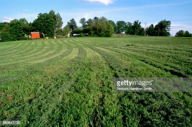 Harvested Alfalfa Field