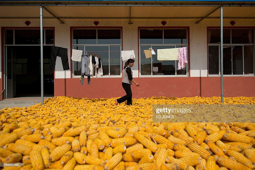Harvested cobs of corn dry on the ground as a woman walks outside her house in a village near Gaomi, in eastern China's Shandong province on October 13, 2012. China is the world's second-biggest corn producer, with output set to increase 3.7 percent this year from 2011, according to the US Department of Agriculture (USDA). AFP PHOTO / Ed Jones