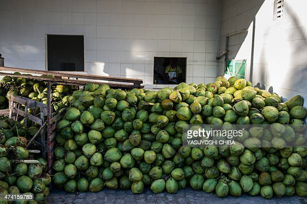 Harvested coconuts are piled at a coconut water factory in Acajutiba about 180 km north from Salvador in Bahia state Brazil on February 18 2014 This...