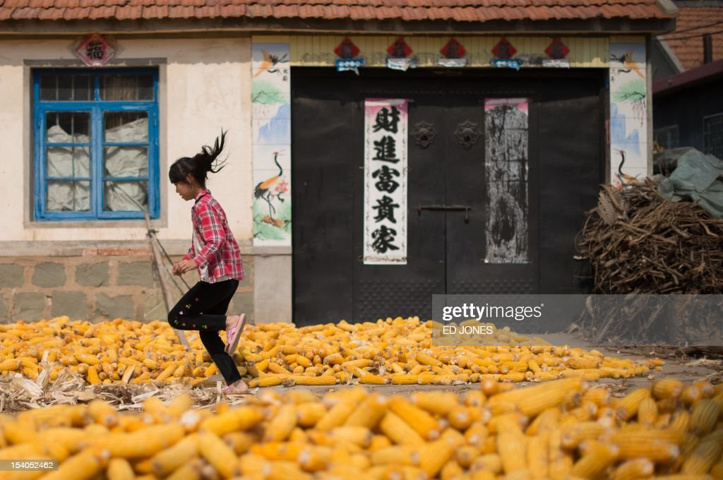 Harvested corn dries on the ground as a girl runs past in a village near Gaomi, in eastern China's Shandong province on October 13, 2012. China is the world's second-biggest corn producer, with output set to increase 3.7 percent this year from 2011, according to the US Department of Agriculture (USDA). AFP PHOTO / Ed Jones
