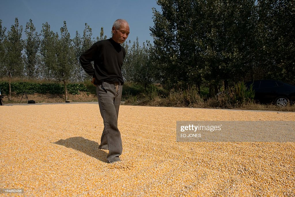 Harvested corn dries on the ground as a man disperses it with his feet in a village near Gaomi, in eastern China's Shandong province on October 13, 2012. China is the world's second-biggest corn producer, with output set to increase 3.7 percent this year from 2011, according to the US Department of Agriculture (USDA). AFP PHOTO / Ed Jones