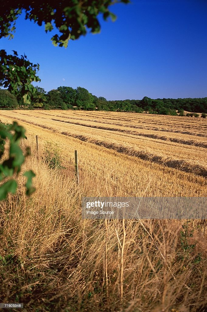 Harvested crops : Stock Photo