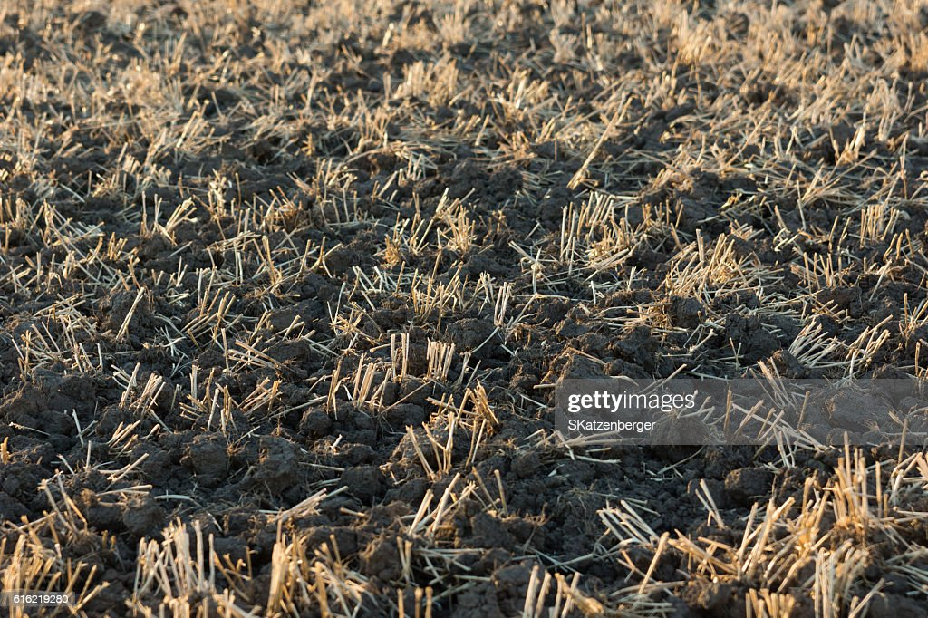 Harvested field : Bildbanksbilder