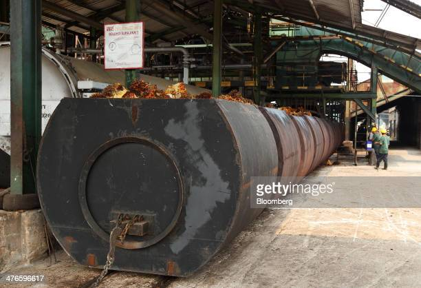 Harvested oil palm fruit sits in containers awaiting sterilization in the processing mill at the Bell Eco Power Sdn palm oil operations in Batu Pahat...