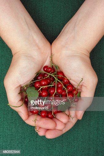 Probar grosella roja cerezas en las palmas de la mujer : Foto de stock
