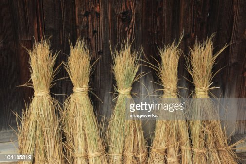 Harvested straw tied in bundles, close-up