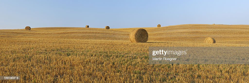Harvested wheat field with bales of hay. : Stock Photo