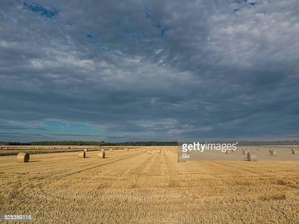 Harvested wheat field with haystacks in distance