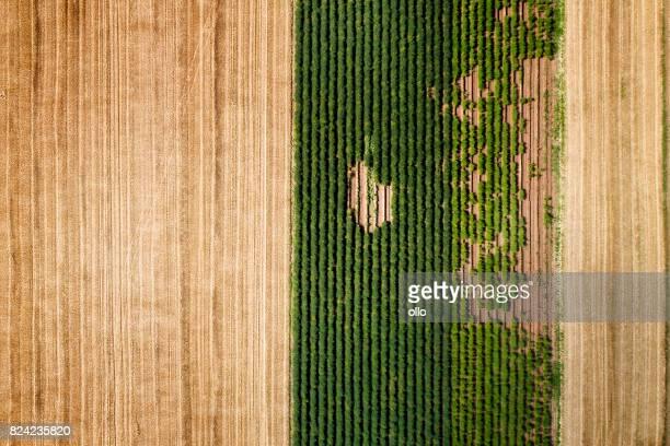 Champs de blé moissonné et culture maraîchère, vue aérienne