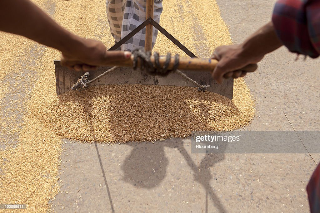 Harvested wheat is laid out to dry at a grain market in the district of Jalandhar in Punjab, India, on Tuesday, April 16, 2013. Wheat harvest in India, the second-biggest grower, may reach a record for a sixth straight year after farmers increased use of high-yielding seeds and winter rains boosted crop prospects, a state-run researcher said. Photographer: Prashanth Vishwanathan/Bloomberg via Getty Images