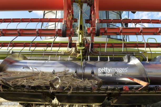 Harvested wheat sits in the blades of a combine harvester at a farm near Drysdale Australia on Wednesday Feb 15 2017 Wheat shipments from Australia...