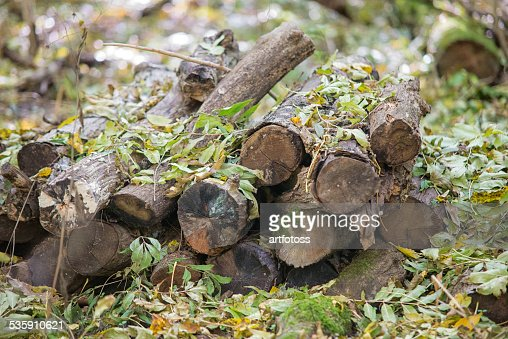 Harvested wood in the forest : Stock Photo