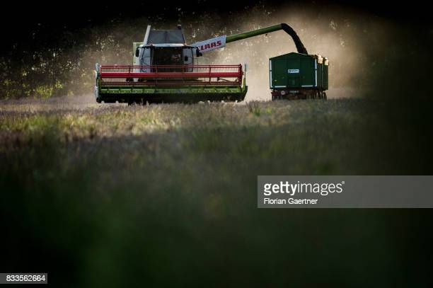 A harvester and a trailer in evening light are pictured on August 14 2017 in Goldbeck Germany