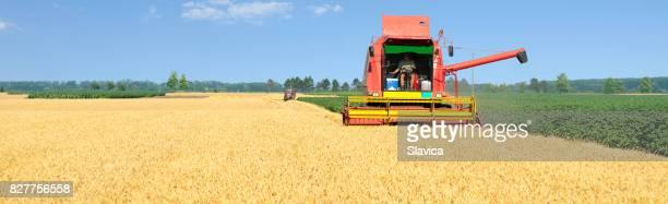 Harvester kombinieren sie ernten Weizen im Sommer
