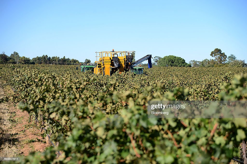 A harvester machine harvests Cabernet Sauvignon grapes at Treasury Wine Estates Ltd.'s Wolf Blass vineyards in the Barossa Valley, Australia, on Monday, March 4, 2013. Treasury, Australia's largest winemaker, is counting on luxury and high-end products to boost earnings as the strength of the Australian dollar makes lower-priced export labels unprofitable and domestic liquor chains push for cheaper products under their own labels. Photographer: Carla Gottgens/Bloomberg via Getty Images