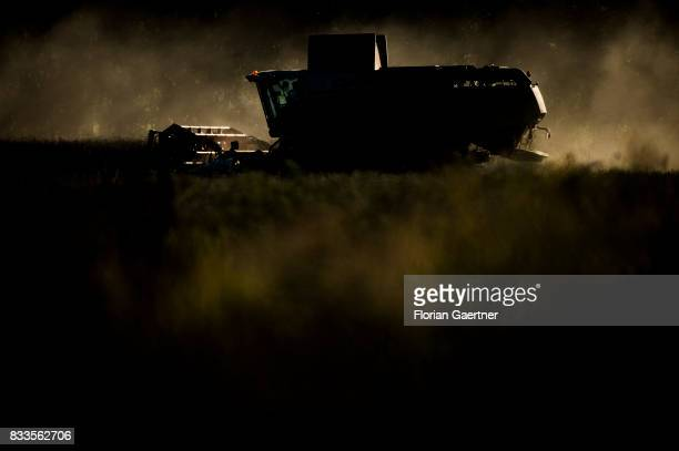 A harvester threshes a corn field in evening light on August 14 2017 in Goldbeck Germany