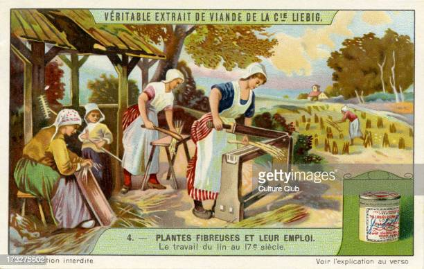 Harvesting and production of flax used for production of linen 17th century From Liebig series Plantes Fibreuses et leur emploi 1910 No 4