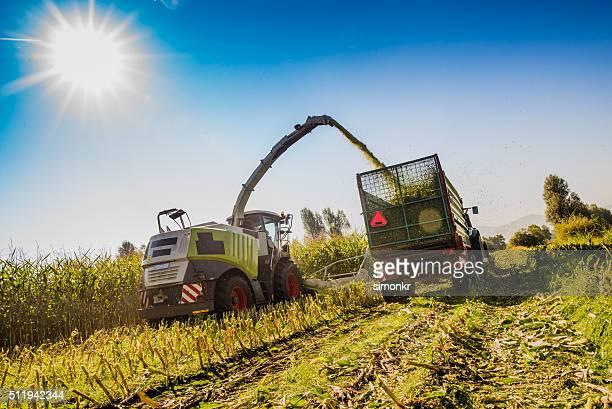 Harvesting in field