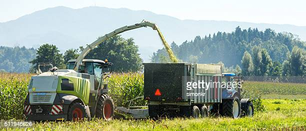 Harvesting in field