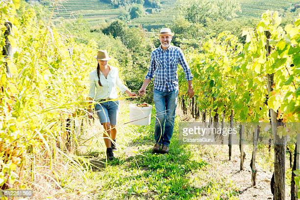 Harvesting in the Vineyards