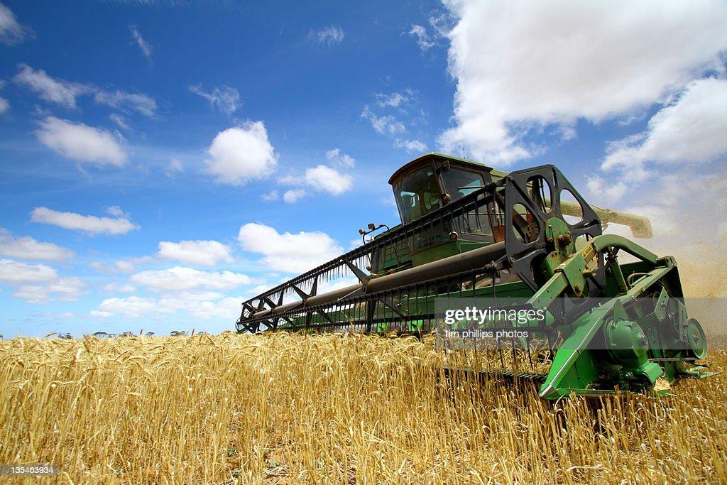 Harvesting Machine in field : Foto de stock