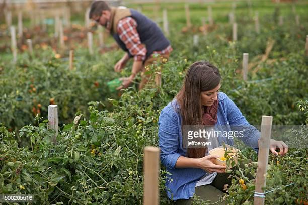 Harvesting nature's bounty