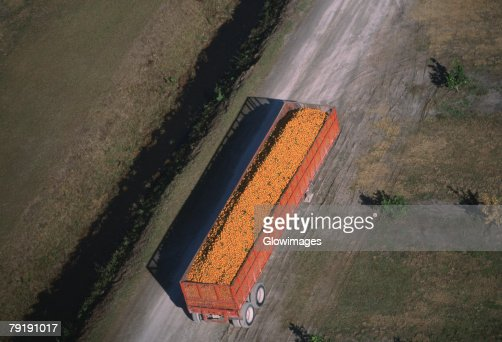 Harvesting oranges, Florida : Stock Photo