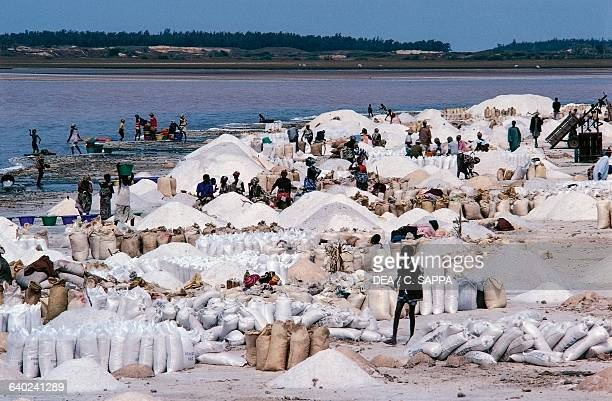 Harvesting salt on the shores of Lake Retba north of Dakar Senegal
