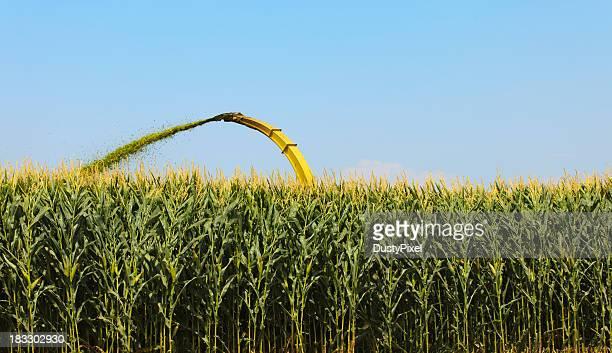 Harvesting Silage