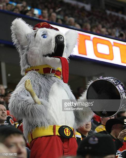 Harvey the Hound appears in the stands as the Calgary Flames face the Boston Bruins during their NHL game at Scotiabank Saddledome February 222011 in...