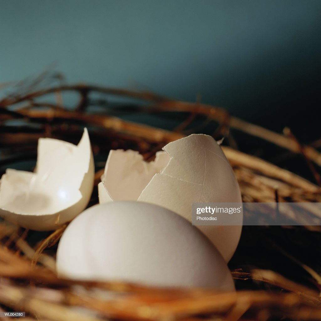 Hatched and Unhatched Eggs