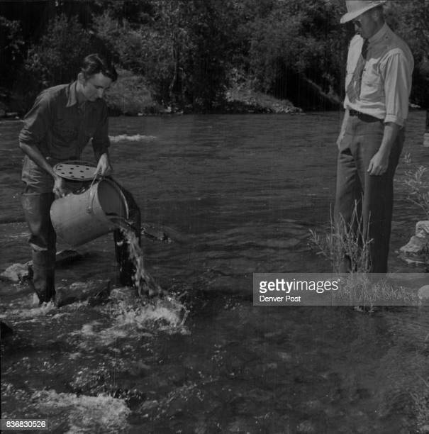 Hatchery helper Dwight Owen plants the first of 300 pounds of eight inch rainbow trout in Clear creek above Golden Watching is Jack Simson fish...