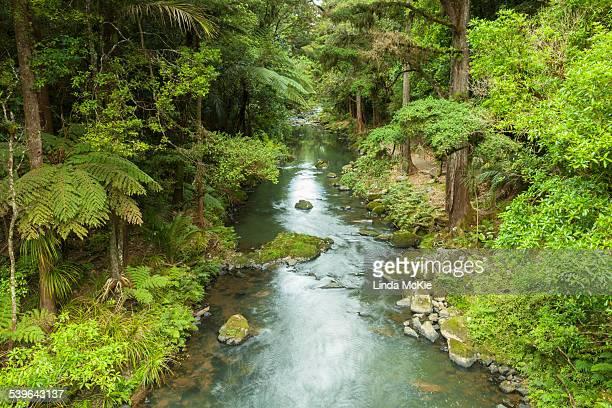 Hatea River, the river just below Whangerai Falls. Whangerei, Northland, North Island, New Zealand