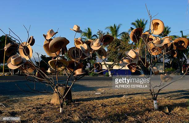 Hats are displayed for sale on the branches of two trees on the road between Buenavista and Apatzingan in state of Michoacan Mexico on February 13...