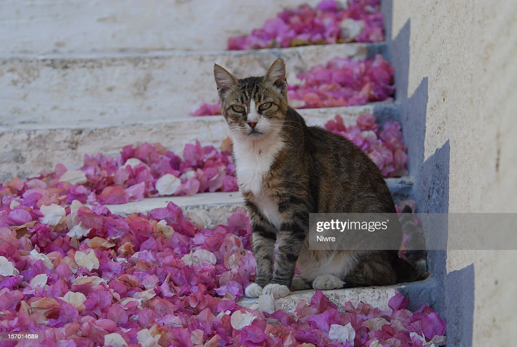 Hauskatze in Griechenland : Stock Photo