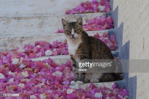 Hauskatze in Griechenland : Bildbanksbilder