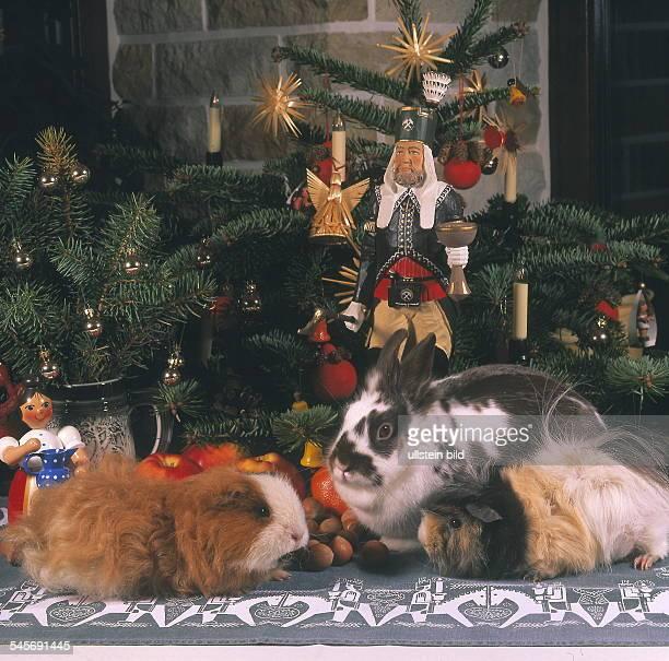 Weihnachtsgeschenk stock photos and pictures getty images for Weihnachtsgeschenke ehefrau
