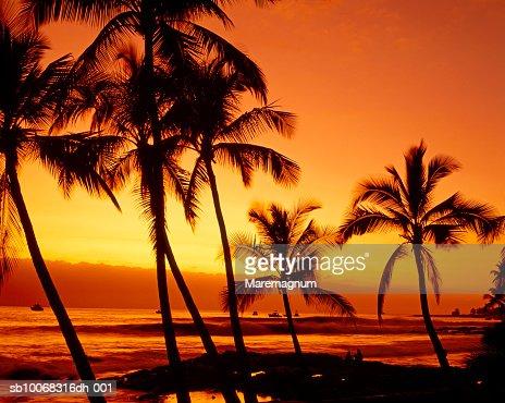 USA, Hawaii, Big Island, Kona, silhouettes of palm trees on beach at sunset