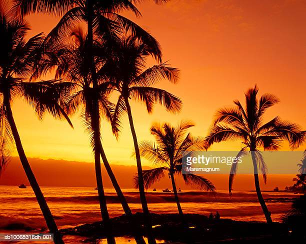 USA, Hawaii, Big Island, Kona, silhouettes of palm trees on beach at sunset