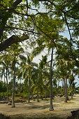 Hawaii, Big Island, USA, EEUU, Julio 2017