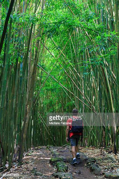 USA, Hawaii, Maui, Bamboo Forest