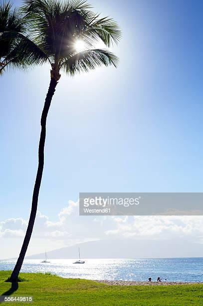 USA, Hawaii, Maui, Kaanapali, palm tree at Kahekili Beach Park and Island Lanai in background