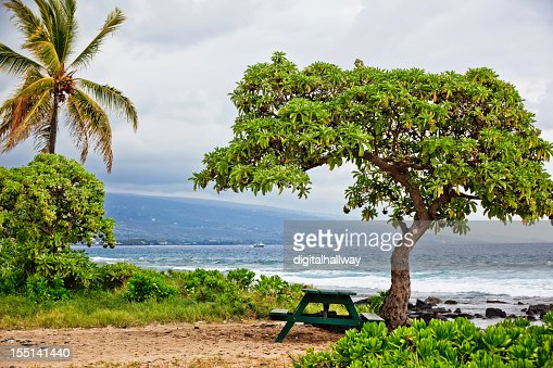 Hawaii Ocean Shore Picnic Table Trees