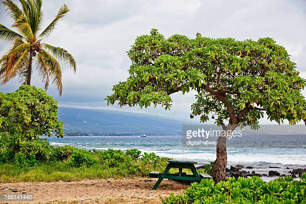 Hawaii Ocean Shore Picnic Table Trees
