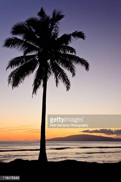 Hawaii palm tree at sunset
